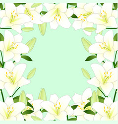 white lily border on green mint background vector image