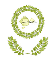 watercolor acacia leaves decoration round frame vector image vector image