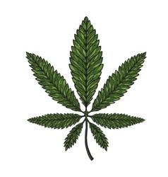 Hand drawn leaf hemp cannabis in decorative style vector image vector image