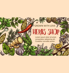 Herb and spice sketch frame vector