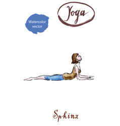 young woman practicing yoga sitting in sphinx vector image vector image