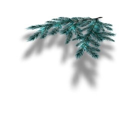 Blue Christmas tree branches on an isolated white vector