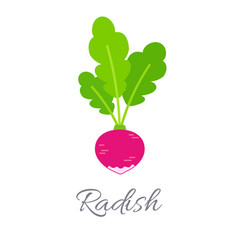 Radish icon with title vector