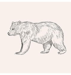 Sketch bear Hand drawn isolated Engraving doodle vector