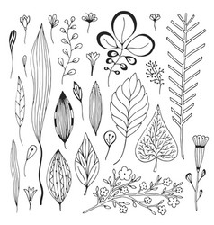 leaves hand drawn collection cute with sketches vector image vector image