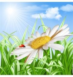 Ladybird on daisy flower vector image