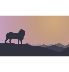 Landscape lion silhouettes at morning vector image vector image