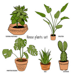 Color houseplants set vector
