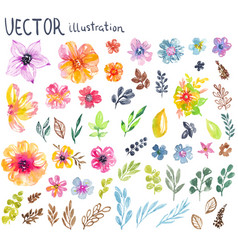 colorful floral collection with flowers leaves vector image