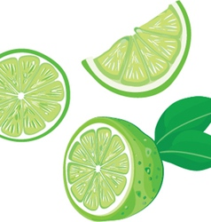 fresh lemons with leaves vector image