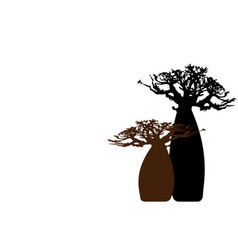 boab or baobab tree background isolated vector image