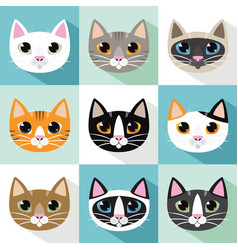 Cats breeds vector