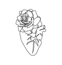 Human heart with a tea rose one line set art vector