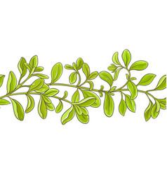 marjoram branch pattern vector image