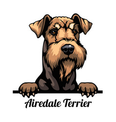 Peeking dog - airedale terrier - dog breed color vector