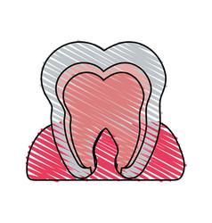 color crayon stripe cartoon internal tooth view vector image