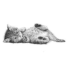 Cat 02 vector image vector image
