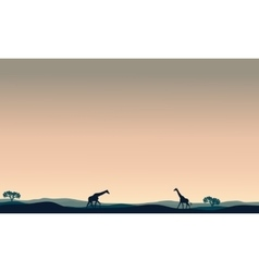 Landscape giraffe at afternoon vector image vector image