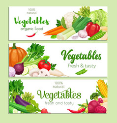 banners vegetables vector image