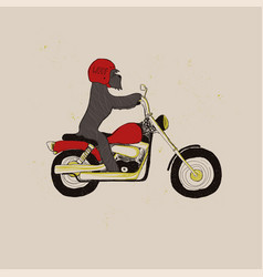 funny schnauzer dog riding motorcycle vector image