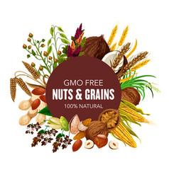 Gmo free super food nuts and cereals grain vector
