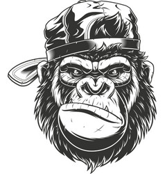 Gorilla head in a baseball cap vector