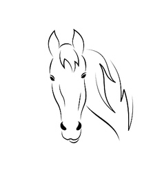Sketch outline head horse isolated on white vector image