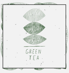 leaves and green tea vector image vector image