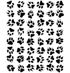 seamless pattern of print of dogs paws vector image