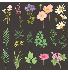 set flowers and herbs - hand drawn watercolor vector image