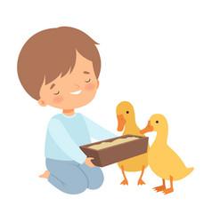 cute little boy feeding ducklings adorable kid vector image
