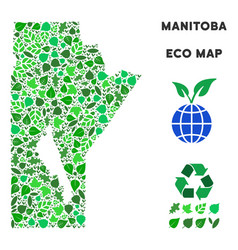 Eco green composition manitoba province map vector