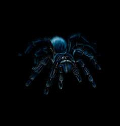 portrait of a spider tarantula grammostola vector image
