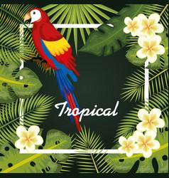 tropical birds design vector image