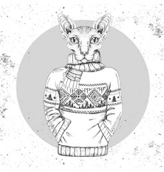Hipster sphynx cat dressed up in pullover vector