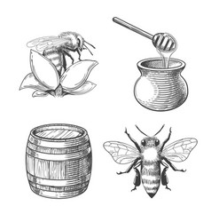 honey pot and bee engravings vector image