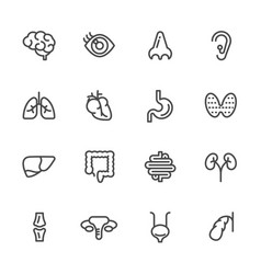 Visceral and anatomy icons line icons set vector