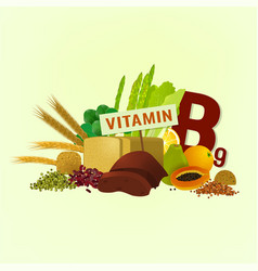 Vitamin b9 in food vector