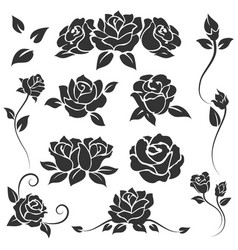 Roses isolated on white background vector