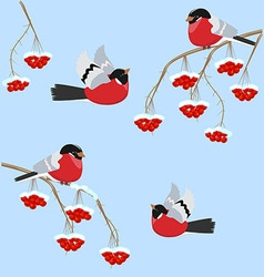 Bullfinch birds sitting on branches with Rowan vector image