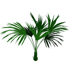 home palm tree vector image