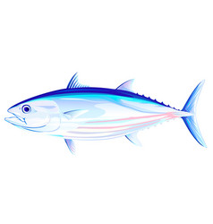 skipjack tuna fish vector image