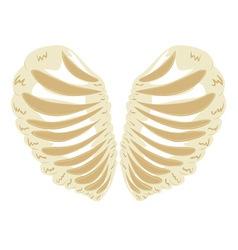 Heart Shaped Rib Cage vector image
