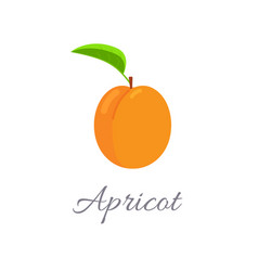 apricot icon with title vector image