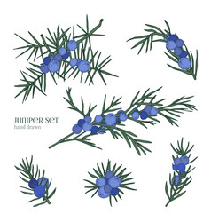 juniper set detailed hand drawn branches with vector image