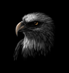 portrait a head a bald eagle on a black vector image