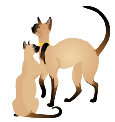 siamese cats vector image