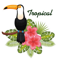 Tropical birds design vector