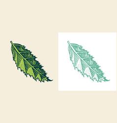 flowering plants tropical or exotic leaves vector image