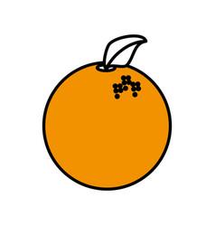 Orange fruit healthy harvest image vector